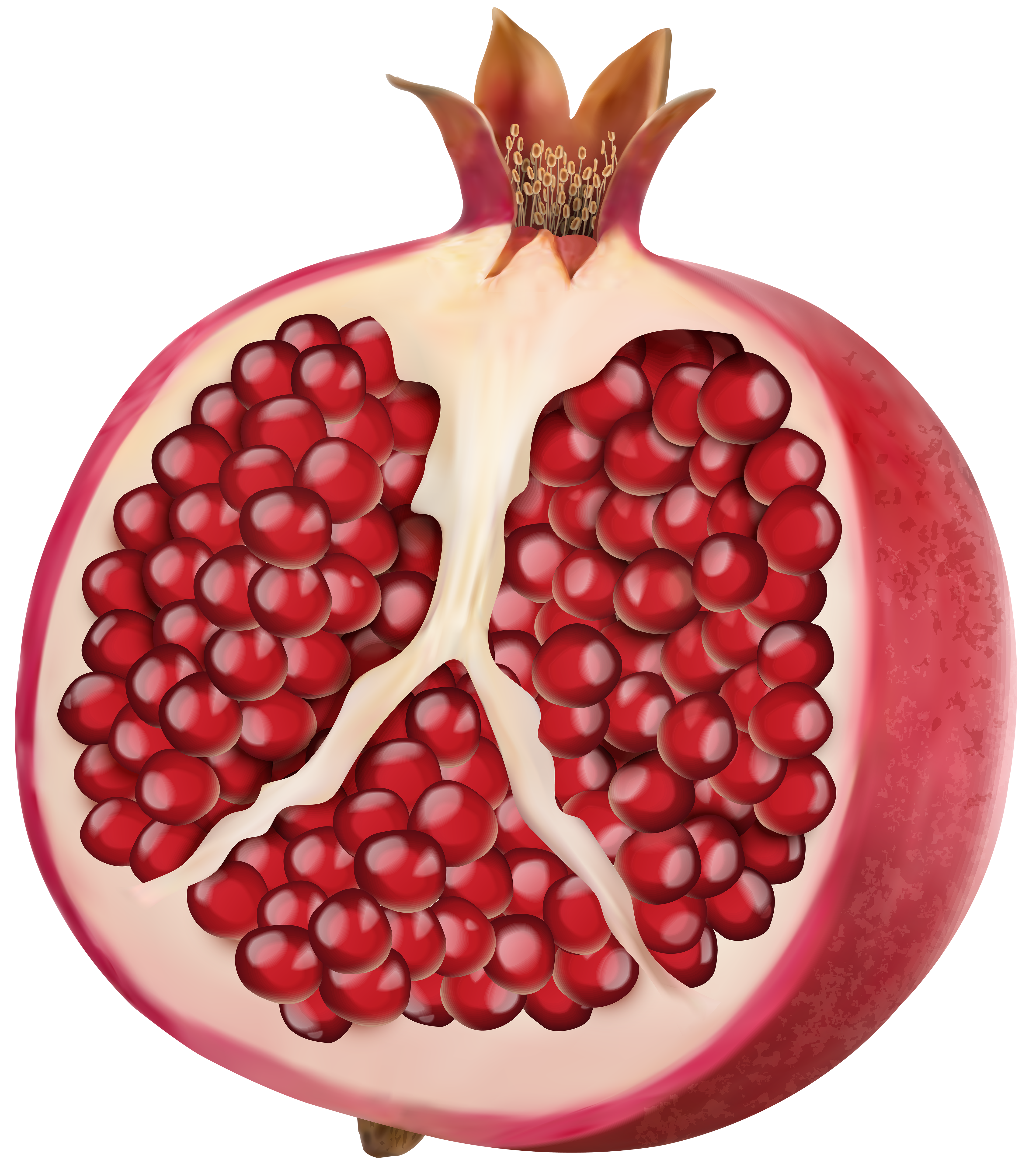 Png clip art image. Pomegranate clipart summer