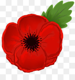 Free download remembrance drawing. Poppy clipart