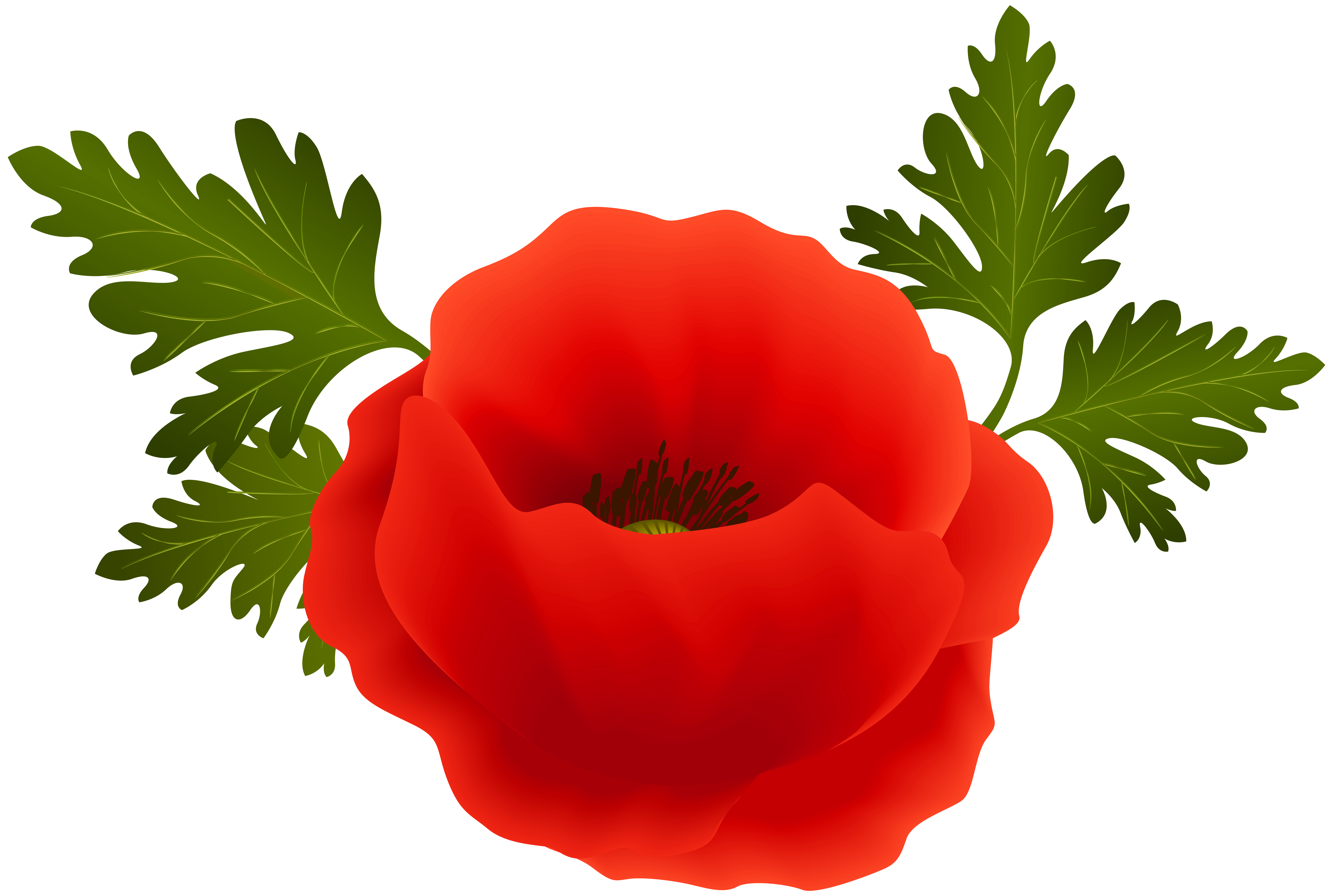 Poppy clipart. Png clip art image