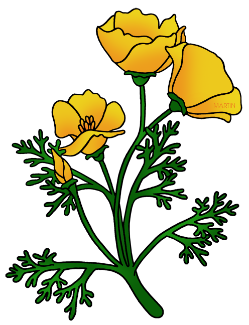 Buttercup at getdrawings com. Poppy clipart 5 flower