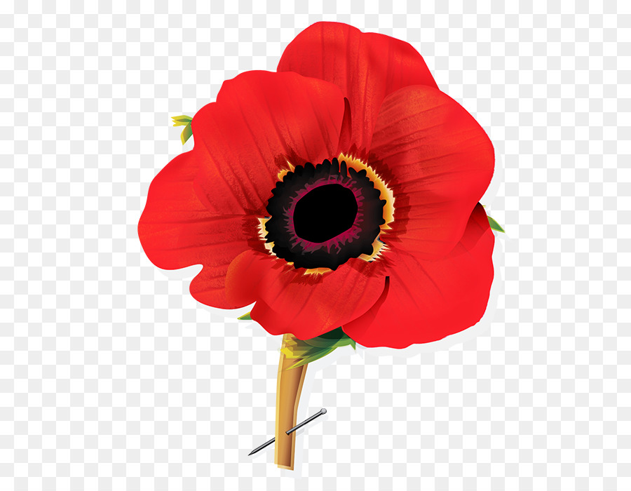 Flowers background flower red. Poppy clipart armistice