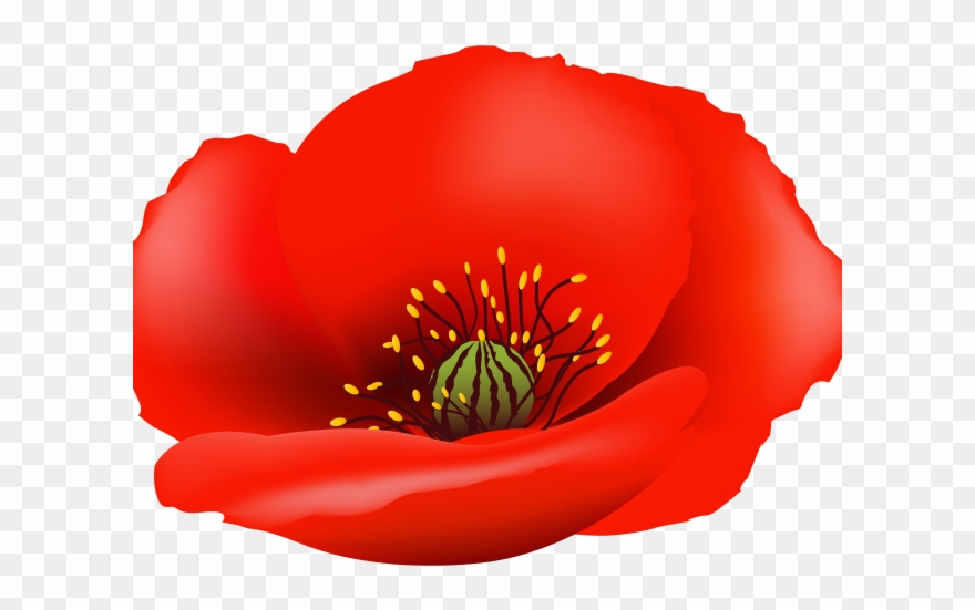 Poppy clipart blank. Png download pinclipart