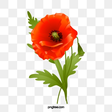 Png vector psd and. Poppy clipart blank