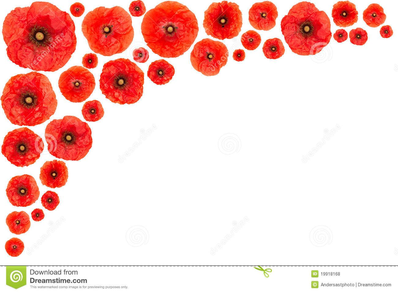 Red flower clip art. Poppy clipart border