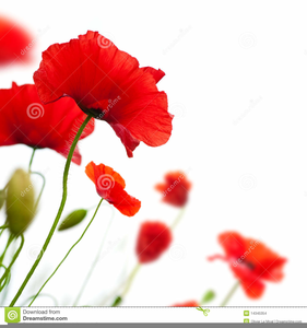 Poppy clipart border. Free images at clker