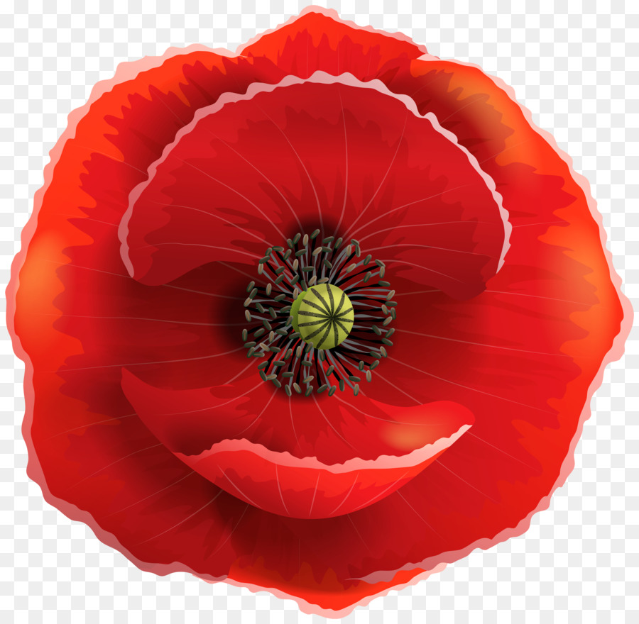 Poppy clipart clear background. Remembrance day flower transparent