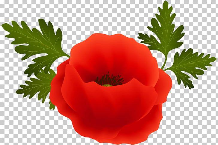 Poppy clipart color. Png armistice day clip
