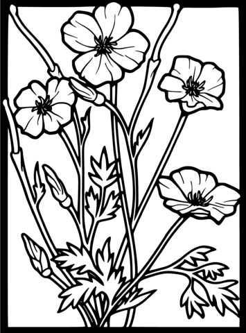 Poppy clipart coloring sheet. Page free printable pages