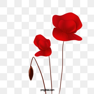 Poppy clipart colour outline. Png vector psd and