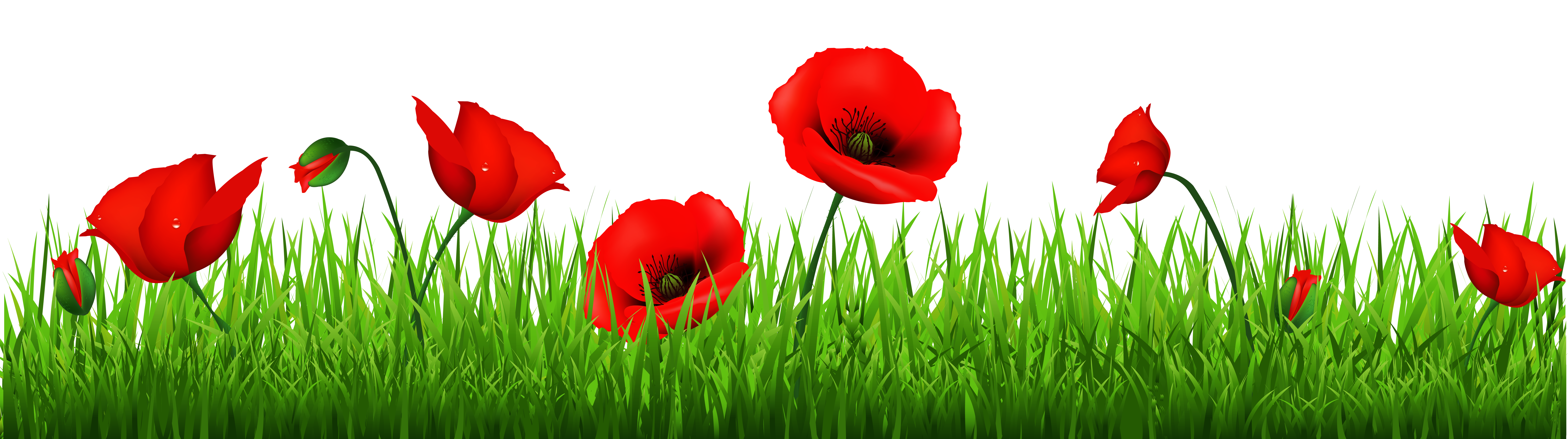 Flowers common armistice day. Poppy clipart copyright free
