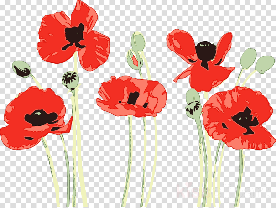 Poppy clipart coquelicot. Red flower corn