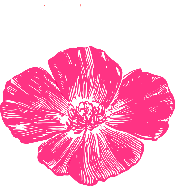 Poppy clipart coral flower. Pink clip art at