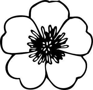 Free cliparts download clip. Poppy clipart drawing