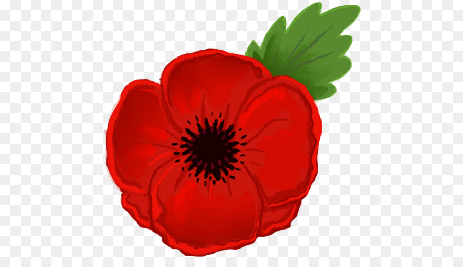 Poppy clipart drawing. Remembrance day flower