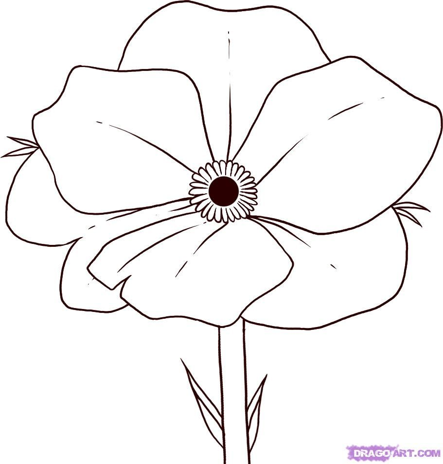 Poppy clipart easy. To draw flowers how