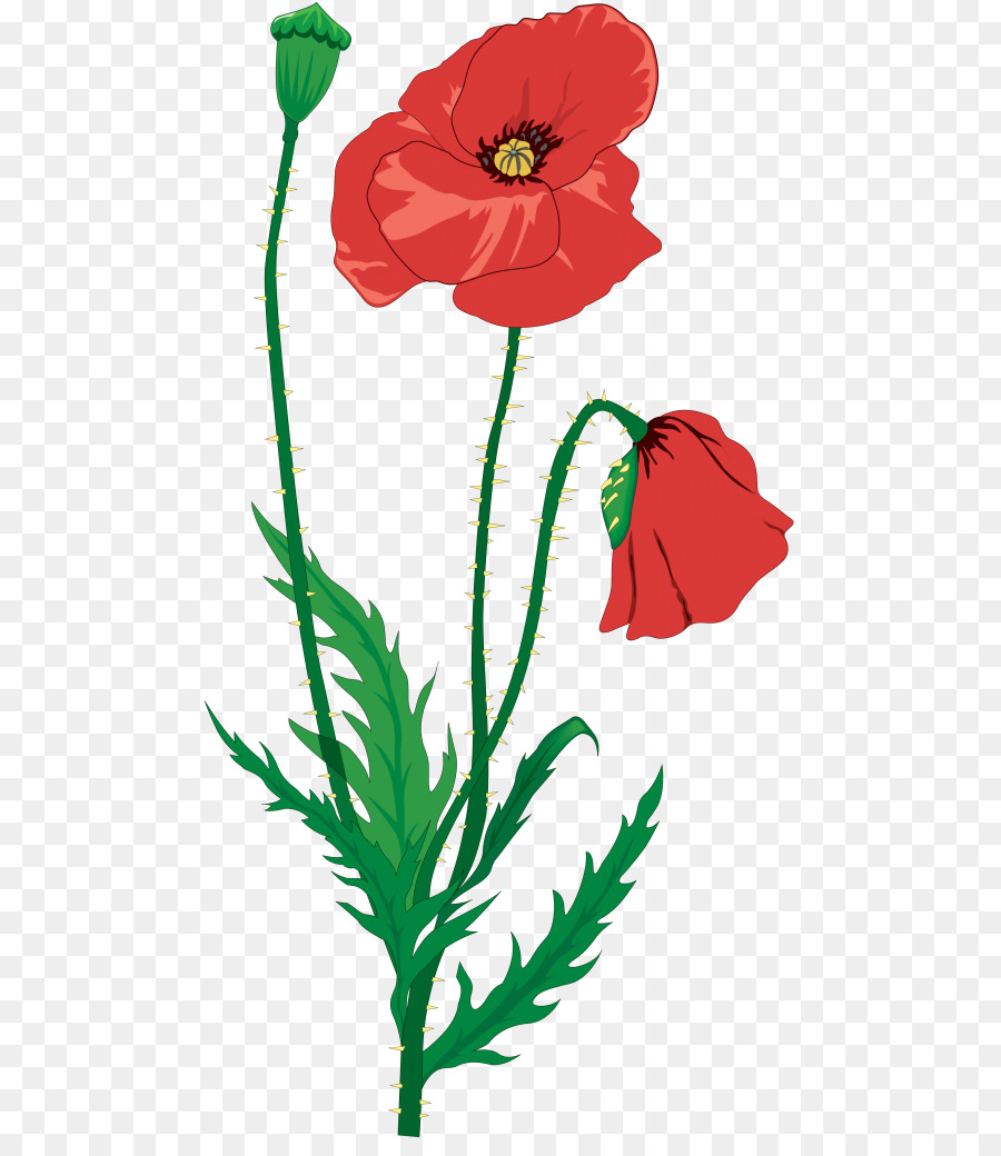 Remembrance day png download. Poppy clipart flanders field