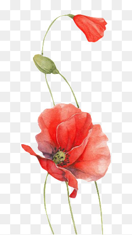 Poppy clipart free vector. Png vectors psd and