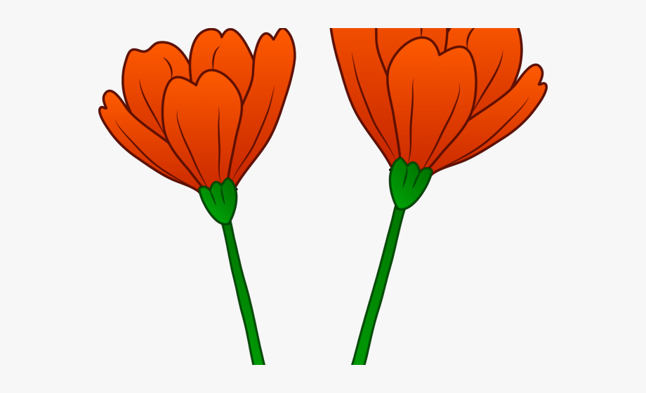 Orange california flower cartoon. Poppy clipart golden poppy