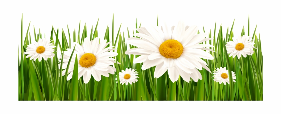 Poppy clipart green grass flower. Poppies and daisies with