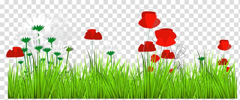 Red and white daisy. Poppy clipart green grass flower