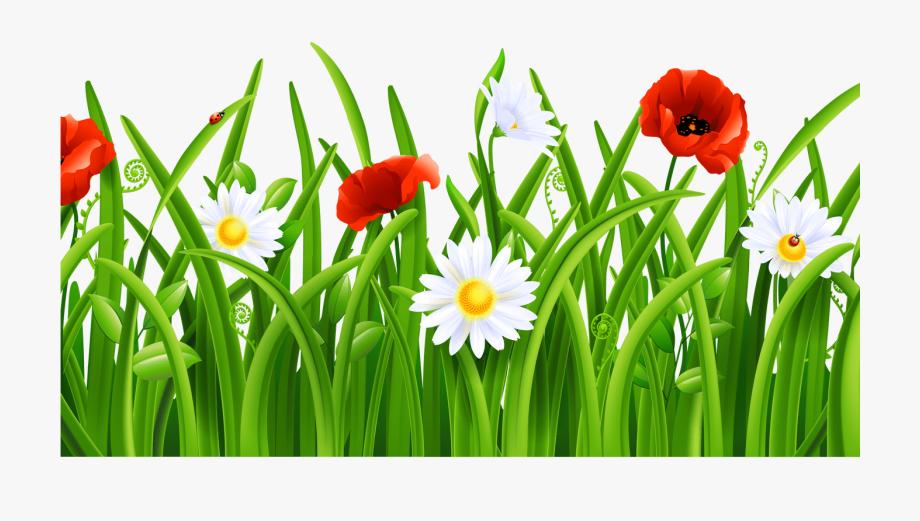 grasshopper clip art. Poppy clipart green grass flower