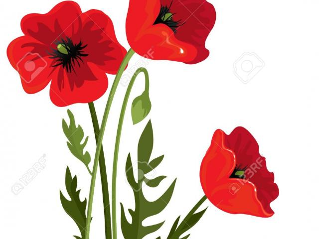 Free download clip art. Poppy clipart large