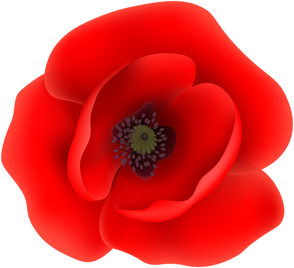 Poppy clipart large. This png image flower