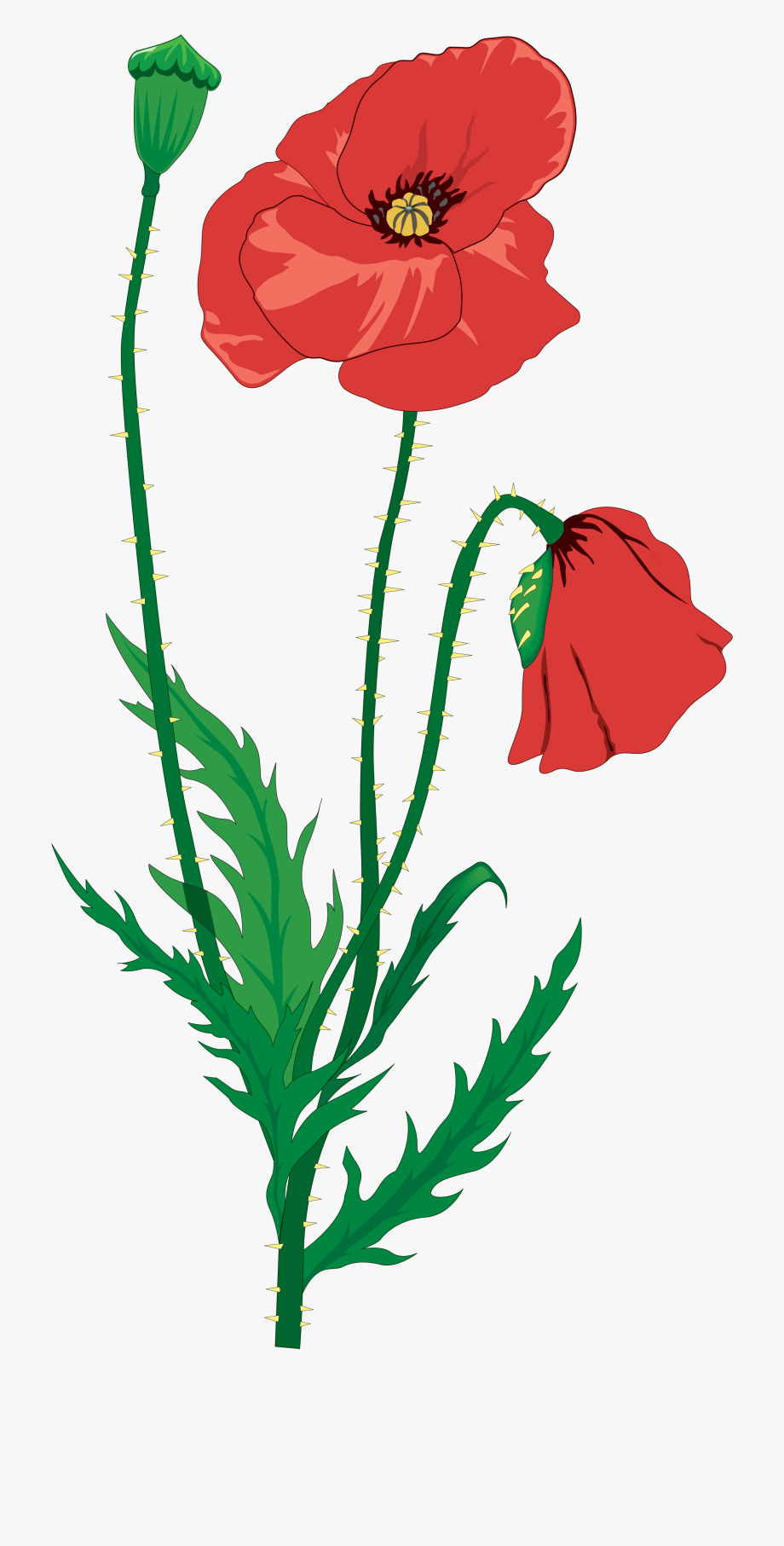Poppy clipart memorial day. Ww poem cliparts