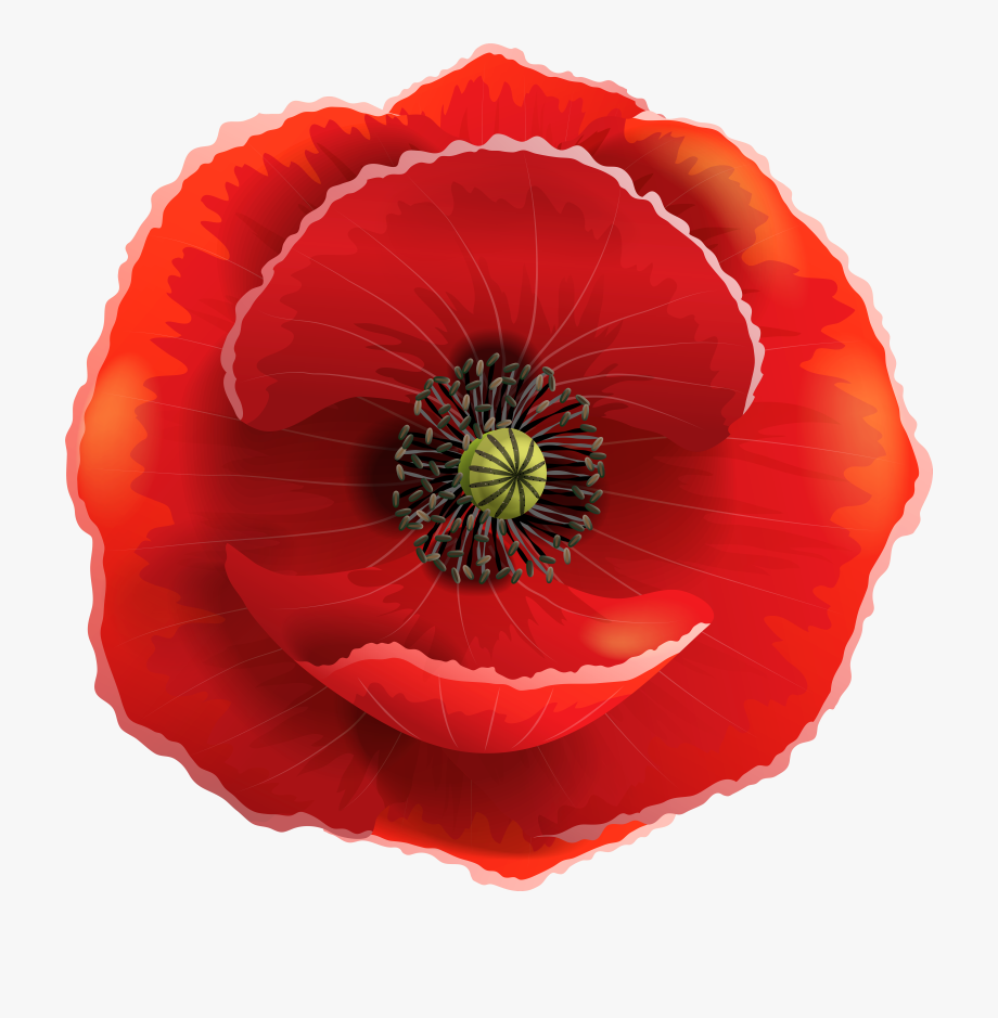 Free cliparts on . Poppy clipart memorial day