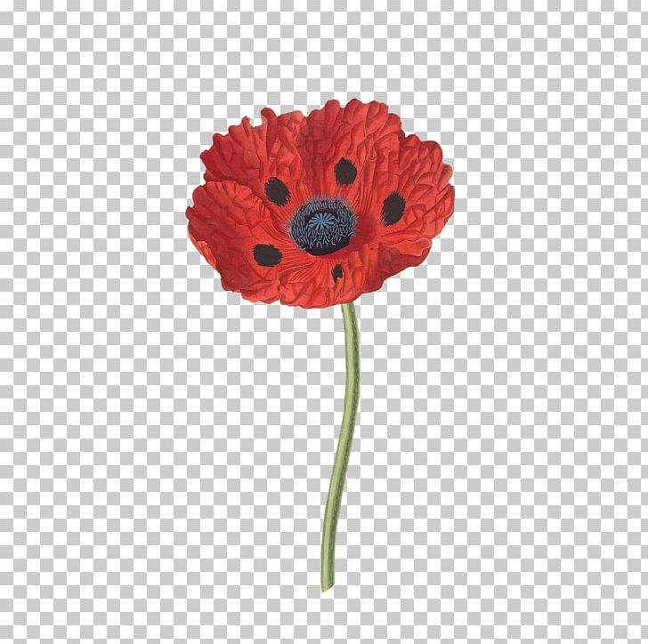 Open png flowers poppies. Poppy clipart nature