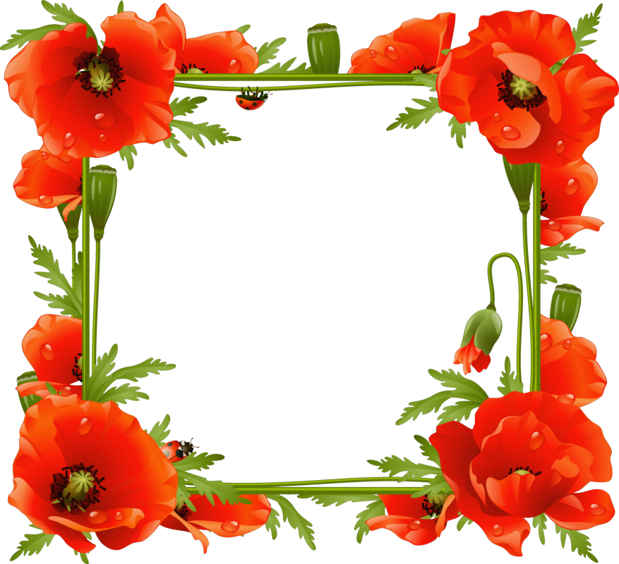 Poppies transparent frame gallery. Poppy clipart one