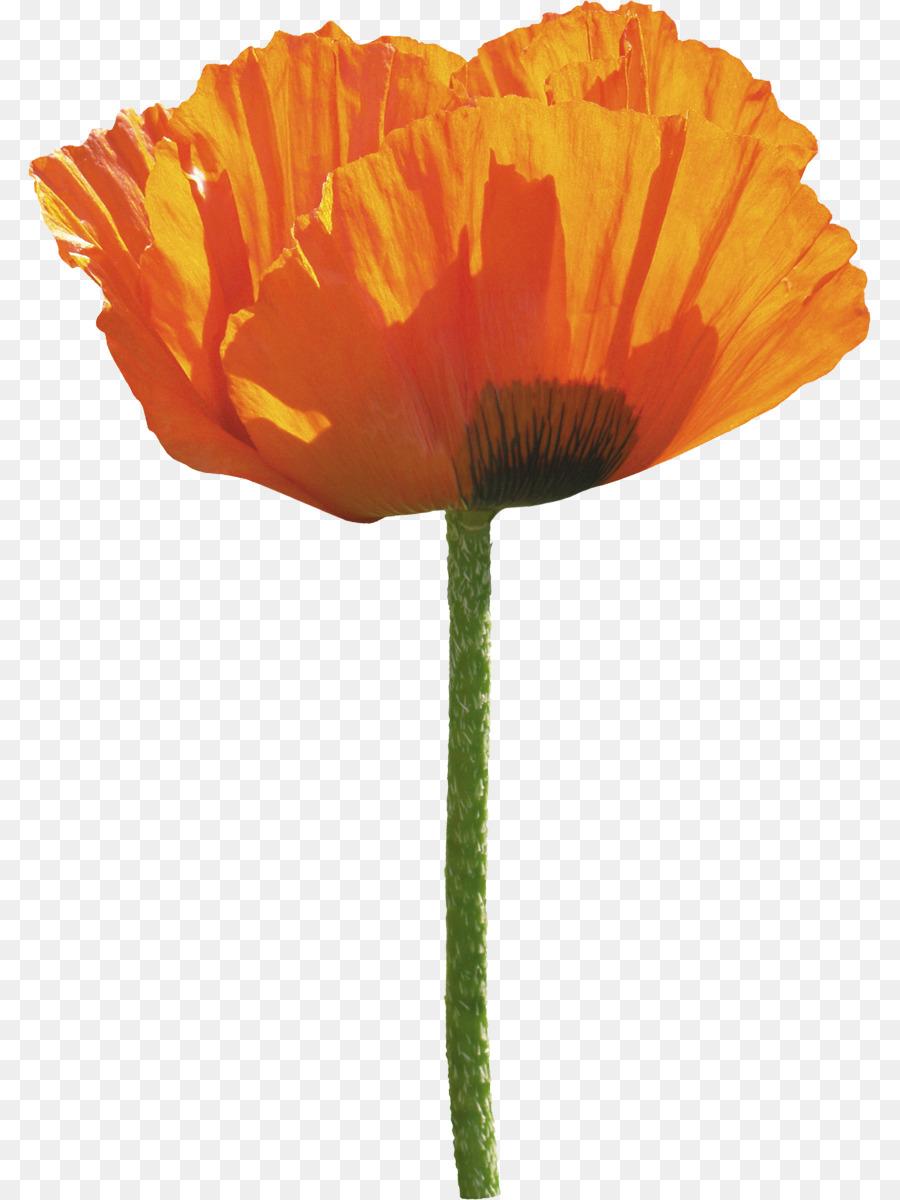 Poppy clipart orange poppy. Flower transparent