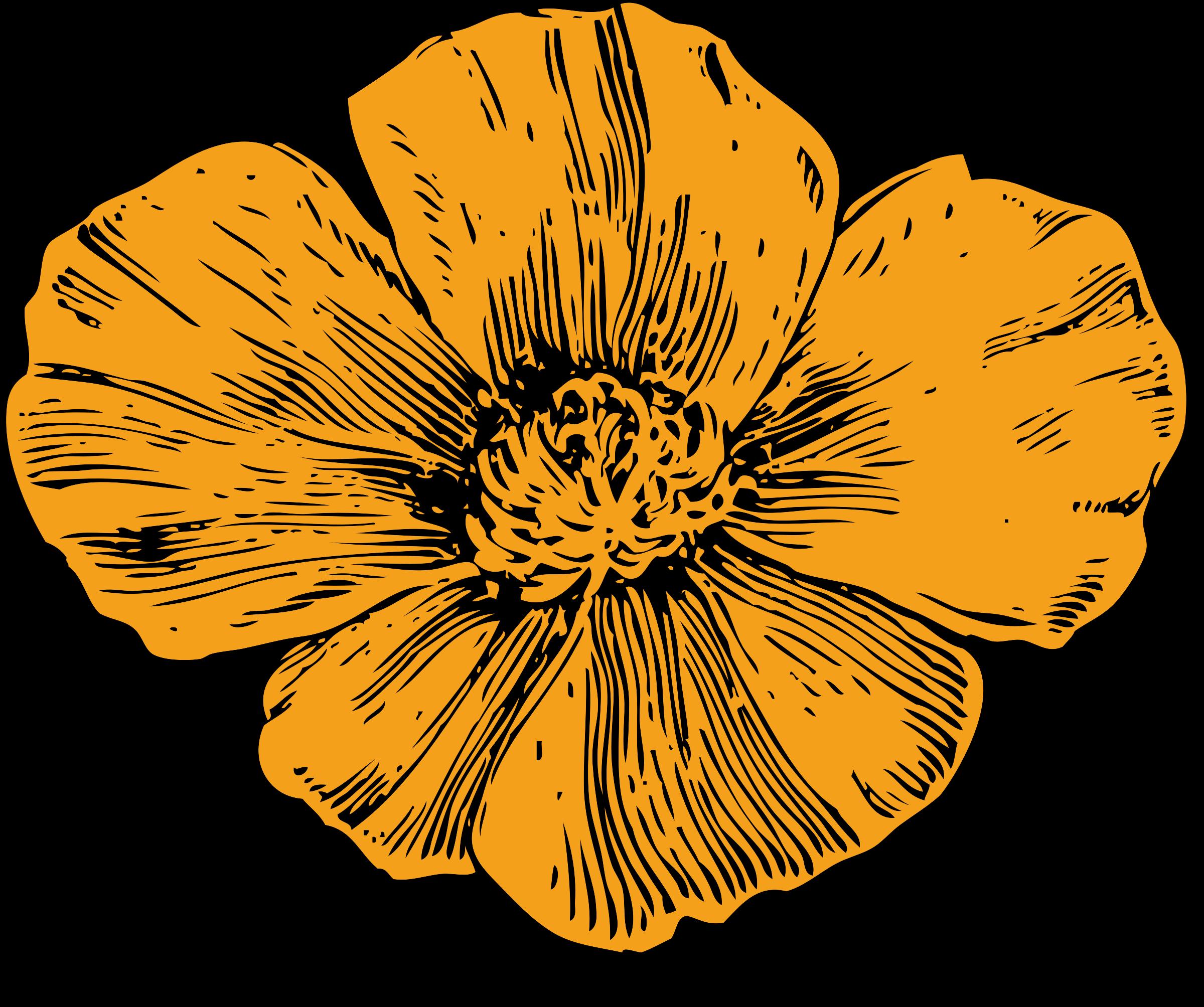 California icons png free. Poppy clipart orange tulip