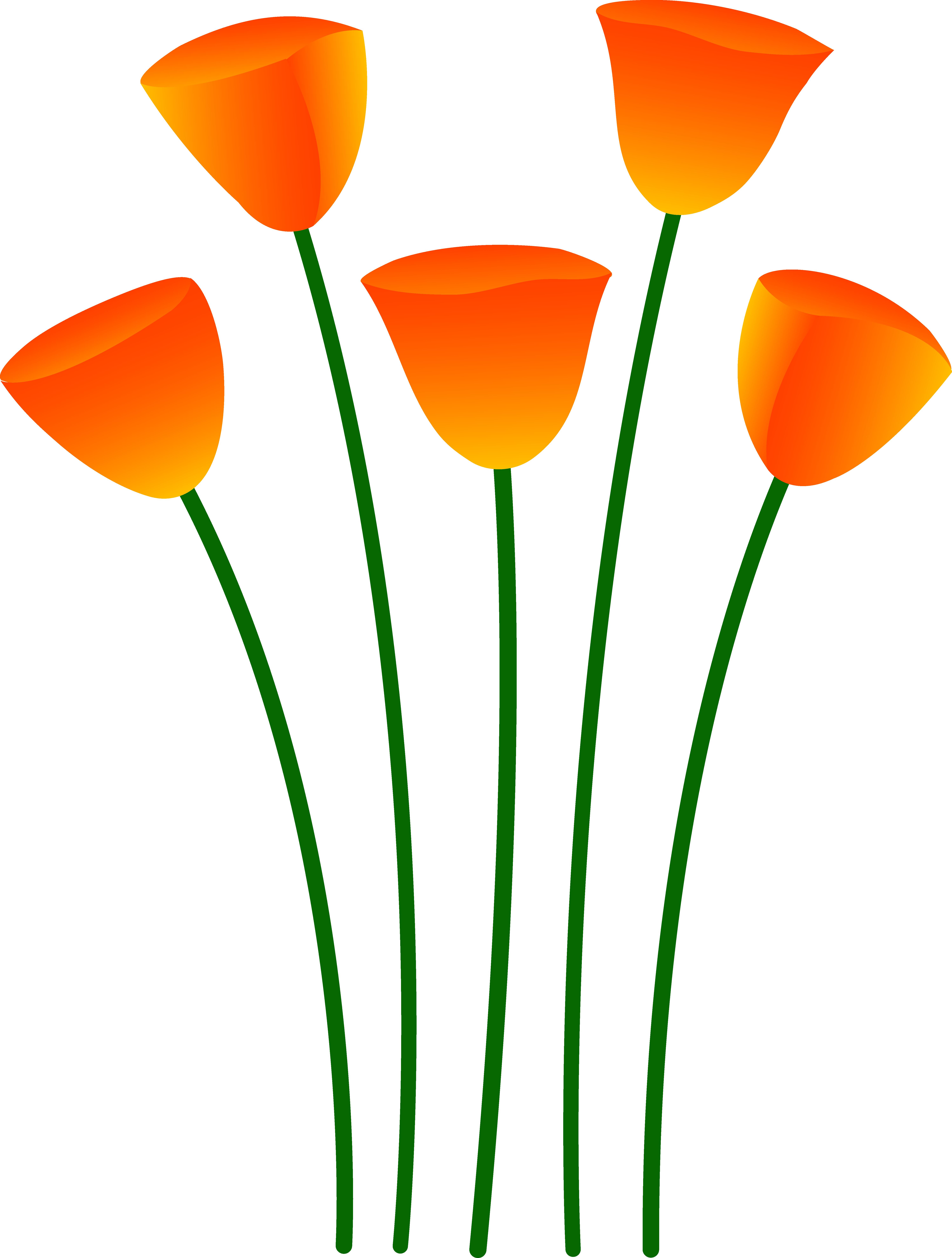 Poppy clipart orange tulip. Flowers free clip art