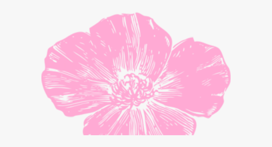 Hot flowers clip art. Poppy clipart pink poppy