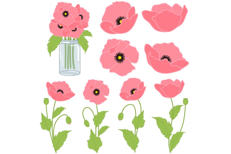 Poppy clipart pink poppy. Poppies set