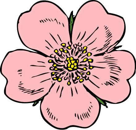 Free cliparts download clip. Poppy clipart pink poppy