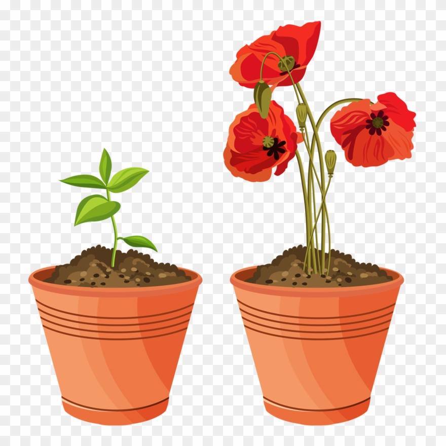 Poppy clipart plantpot.  house cartoon stickers