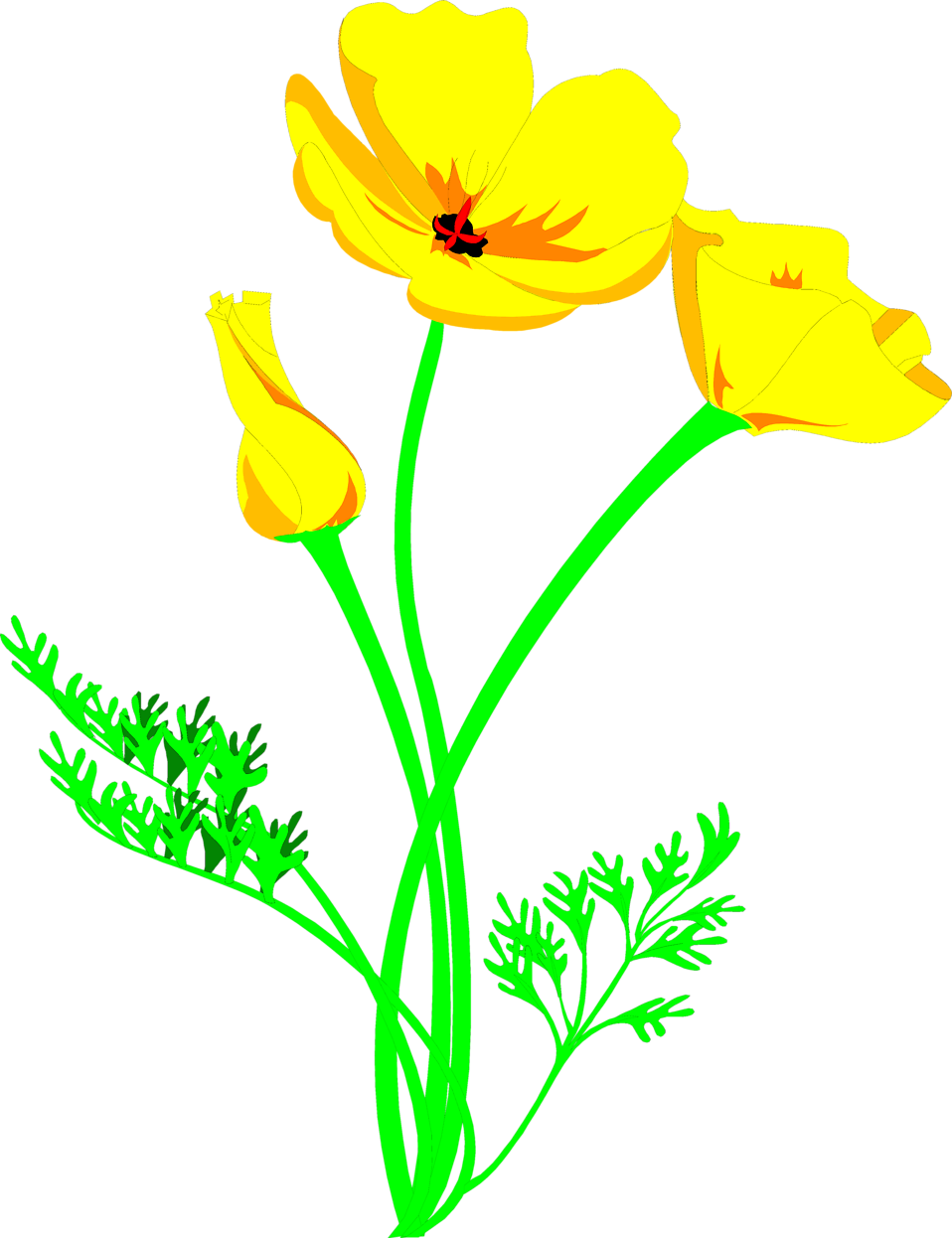 Free images of poppies. Poppy clipart poppy field