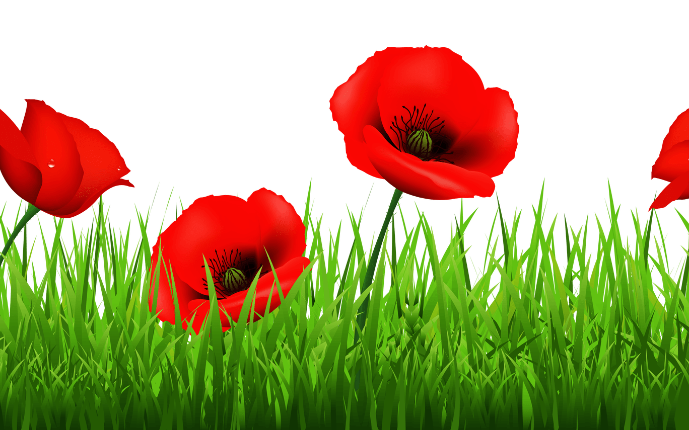Clip art flower gallery. Poppy clipart poppy field