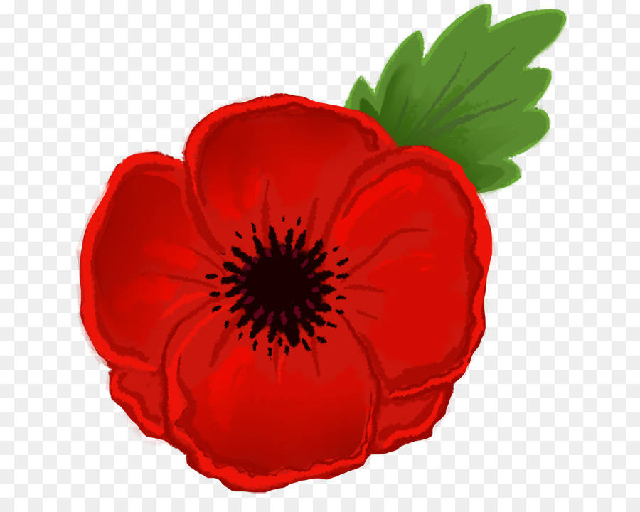 Transparent clip art . Poppy clipart poppy flower