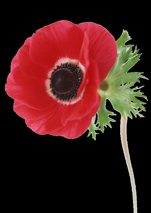 Forgetmenot poppies. Poppy clipart poppy wreath