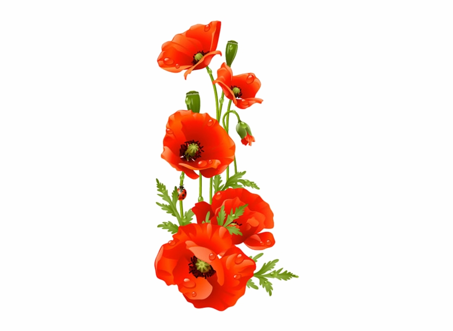 Drawing bouquet flower . Poppy clipart red poppy