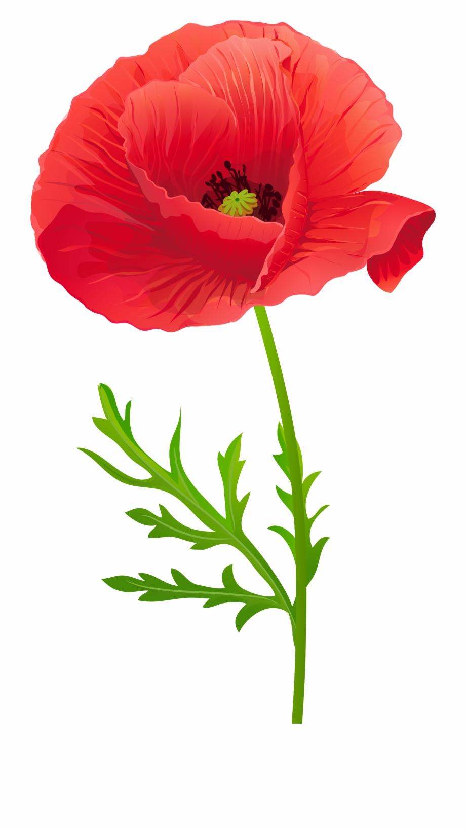 Poppy clipart red poppy. Opium flower clip art