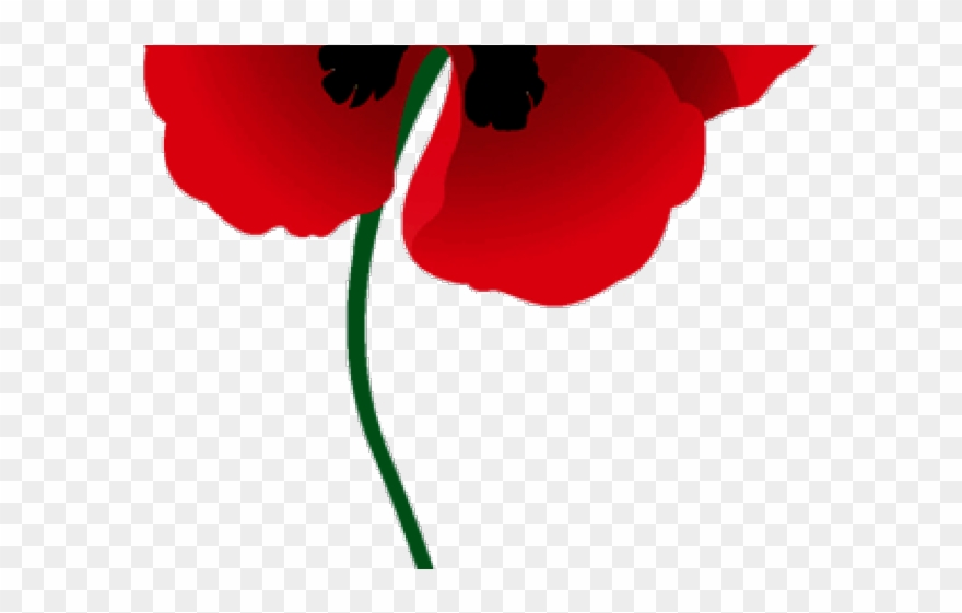 Memorial day png download. Poppy clipart red poppy