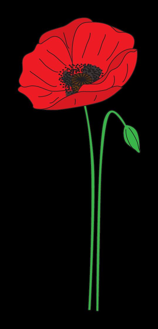 poppy clipart remebrance #139437764