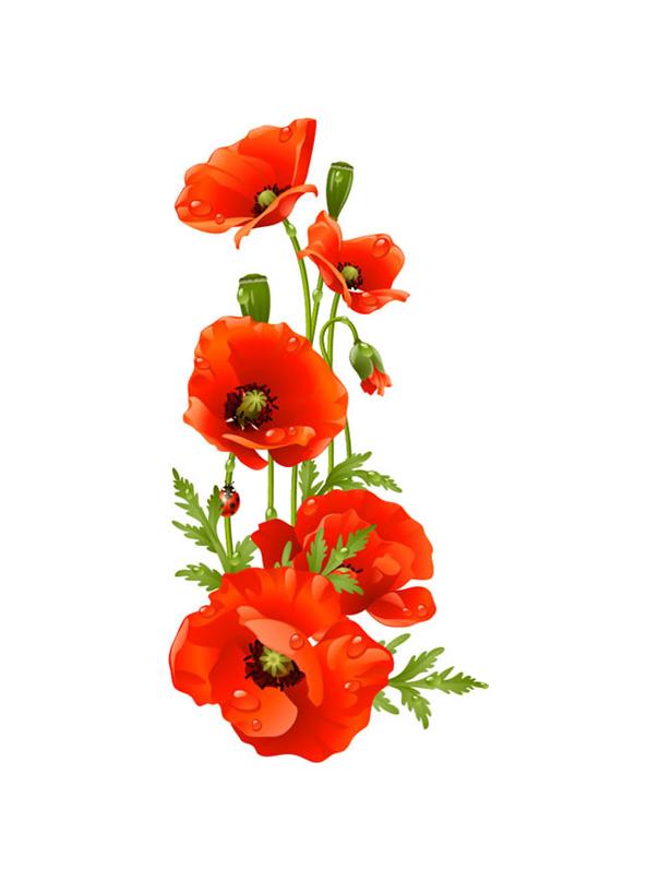 Poppy clipart remebrance. Remembrance flower clip art