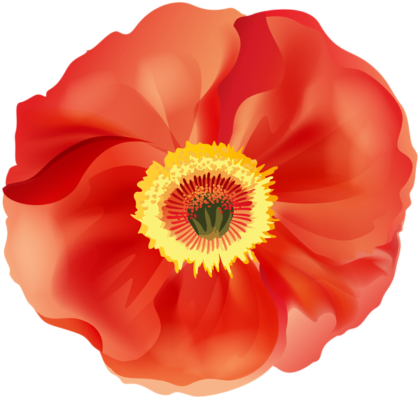 Poppy clipart remembrance day. Png clip art image