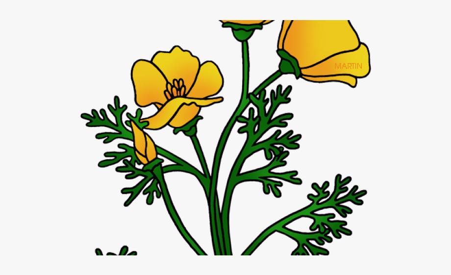Poppy clipart state california flower. Free