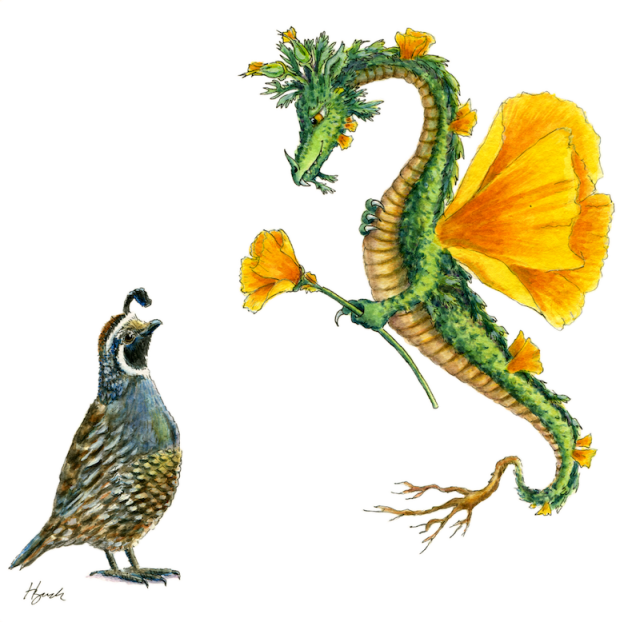 Dragon the dragons of. Poppy clipart state california flower